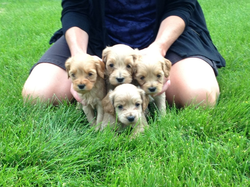 4 left in the Summer 2013 litter!